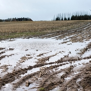 Late Season Wet Weather Creates Hurdles for Manure Application